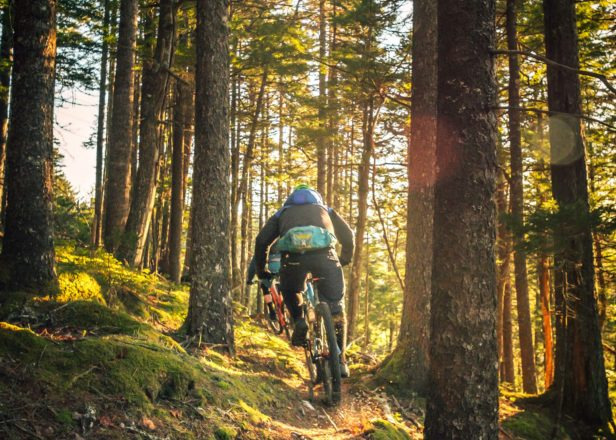 Image of mountain biker in forest